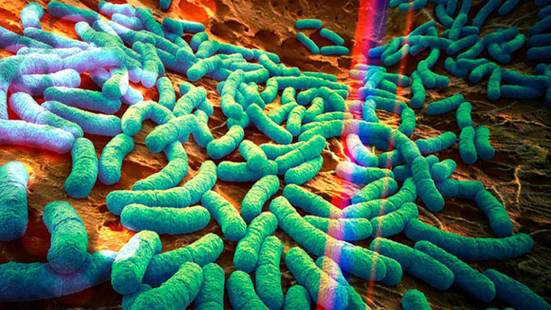 Una dieta su misura basata sul microbioma migliora controllo glicemico nei diabetici